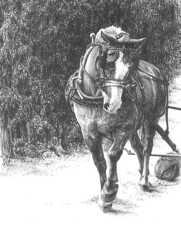 Horse Poster featuring the drawing Powerful Grace by Barbara Widmann