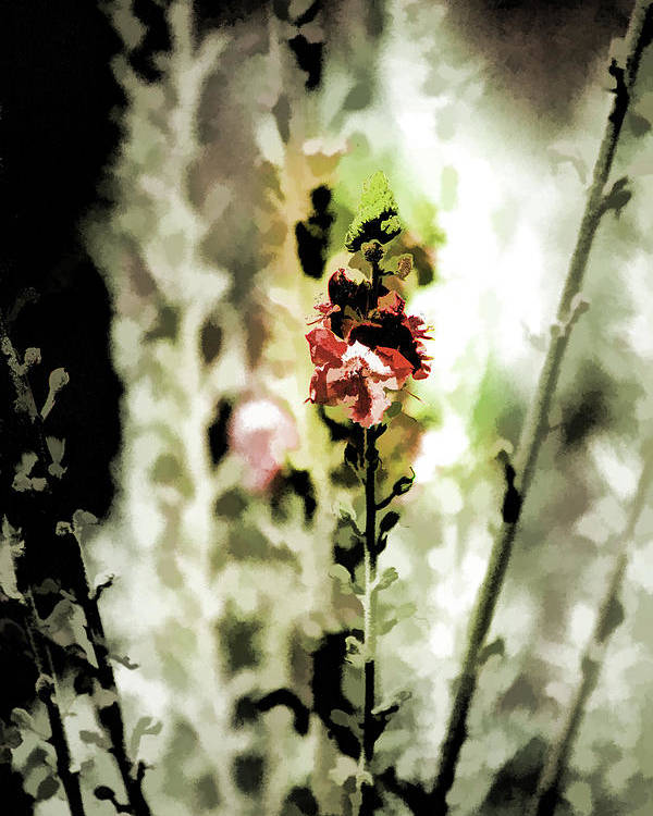Tall Flower Stalks Poster featuring the photograph Pretty Perennial by Bonnie Bruno