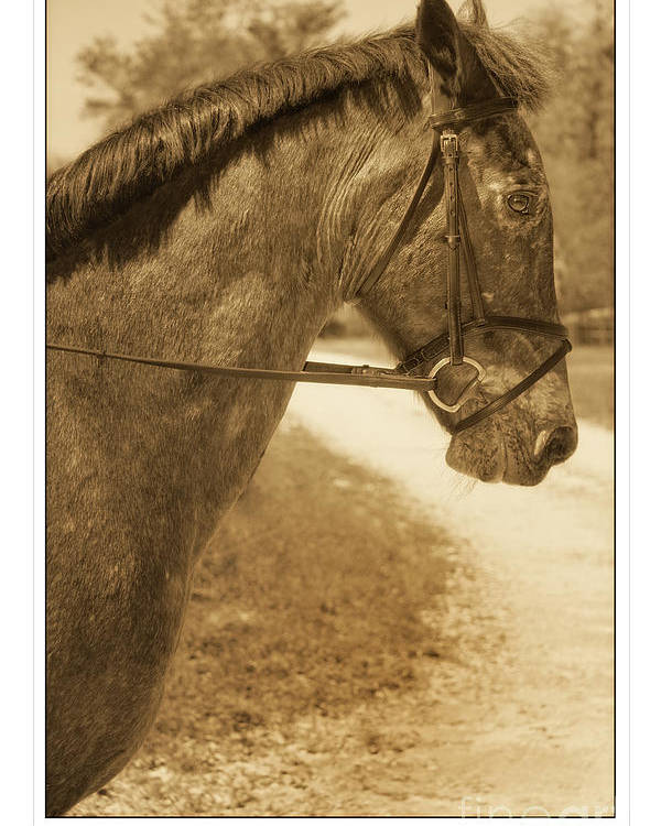 Horse Poster featuring the photograph Profile by Stephanie Hayes