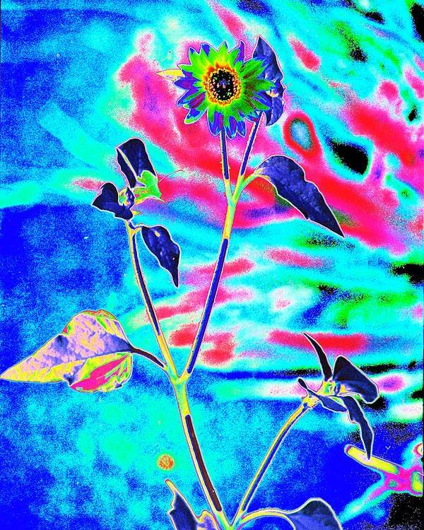 Psychedelicized Daisy Poster featuring the photograph Psycho Daisy by Richard Henne