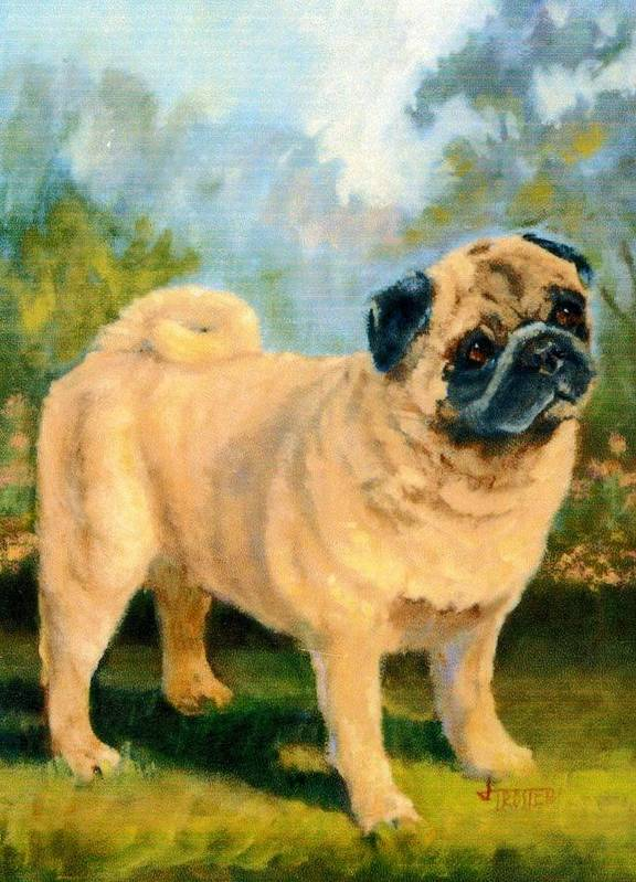 Animal Poster featuring the painting Pug In The Park by Jimmie Trotter