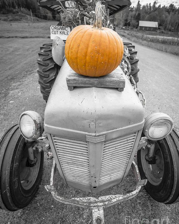 Pumpkin Poster featuring the photograph Pumpkins For Sale Vermont by Edward Fielding