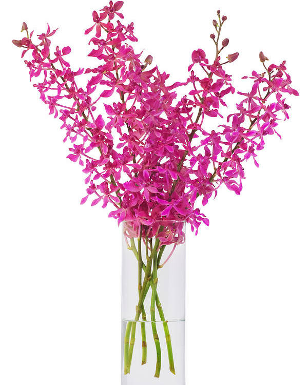 Asian Poster featuring the photograph Purple Orchid In Vase by Atiketta Sangasaeng