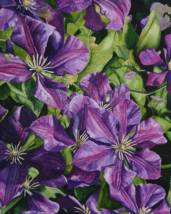 Clematis Poster featuring the painting Purple Persuasion by Helen Shideler