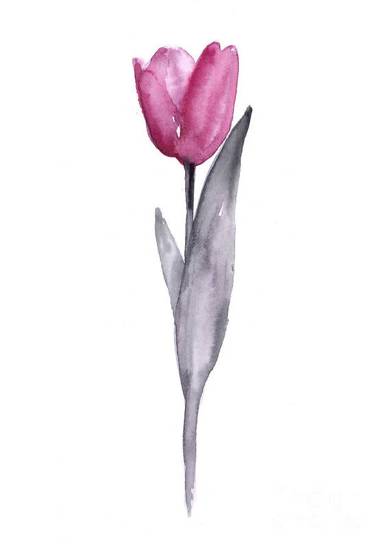 Tulip Poster featuring the painting Purple Tulip Watercolor Art Print Painting by Joanna Szmerdt