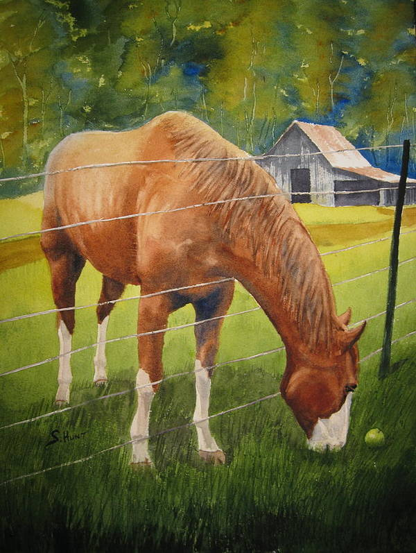 Horse Poster featuring the painting Quiet Comfort by Shirley Braithwaite Hunt