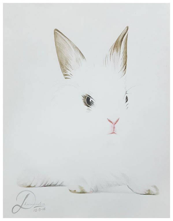 Rabbit Realistic Color Pencil Sketch Poster By Sketches In
