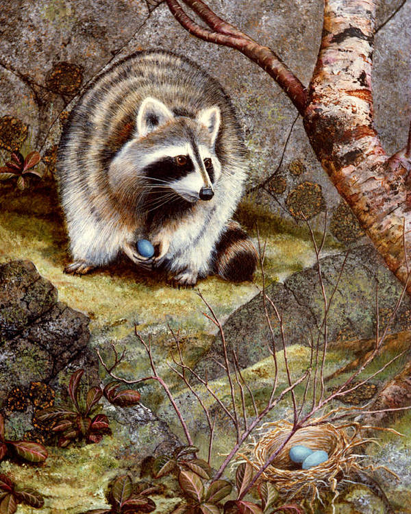 Raccoon Found Treasure Poster featuring the painting Raccoon Found Treasure by Frank Wilson