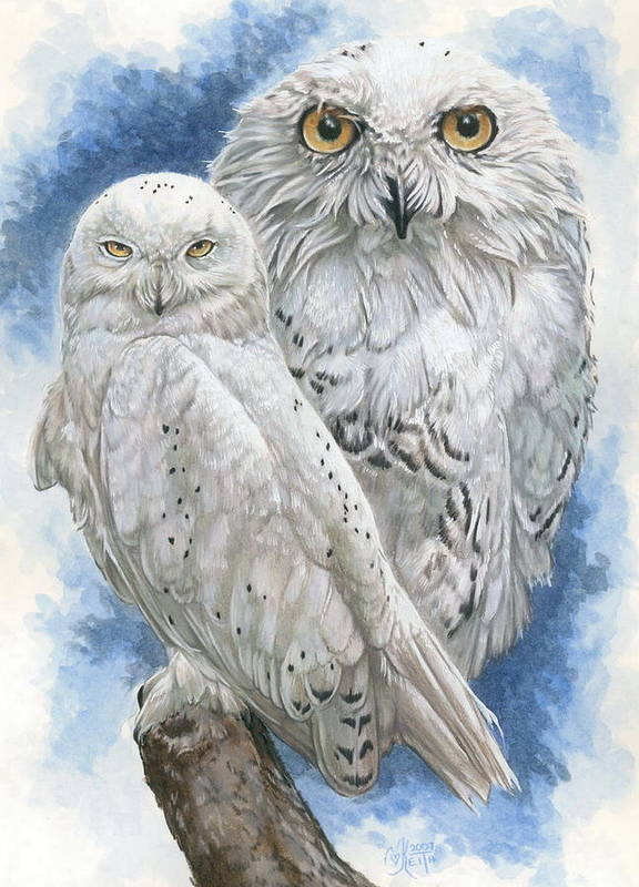 Snowy Owl Poster featuring the mixed media Radiant by Barbara Keith