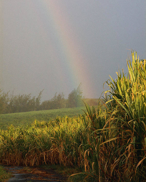 Vertical Poster featuring the photograph Rainbow Arching Into Field Behind Stream by Stockbyte