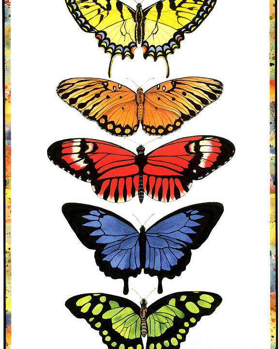 Butterflies Poster featuring the painting Rainbow Butterflies by Lucy Arnold