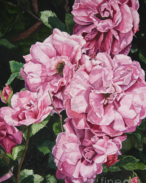 Floral Poster featuring the painting Ramblin Rose by Helen Shideler