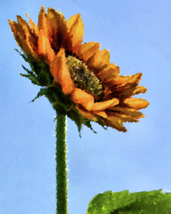 Sunflower Poster featuring the painting Reach For The Sun by Kristin Elmquist
