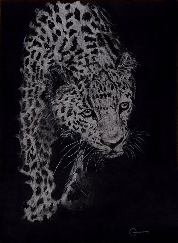 Cheeta Poster featuring the drawing Realistic Cheeta by Chethan Kumar KM