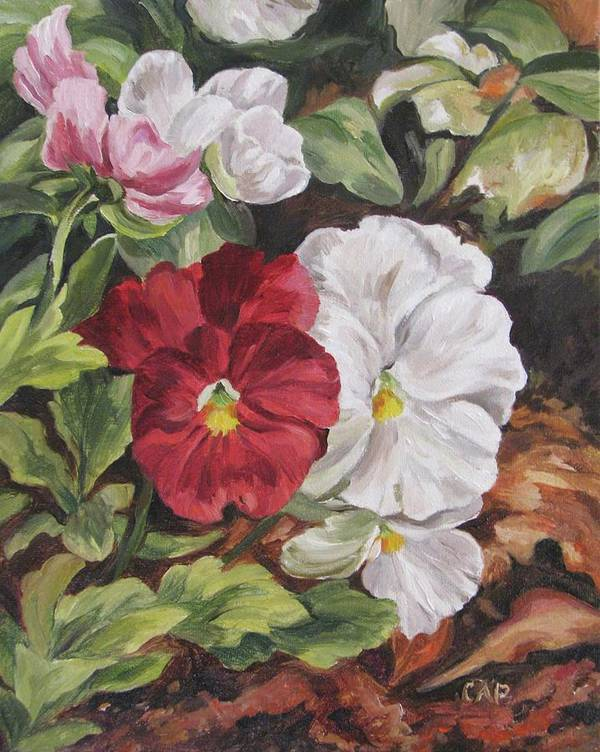 Garden Poster featuring the painting Red and White Pansies by Cheryl Pass
