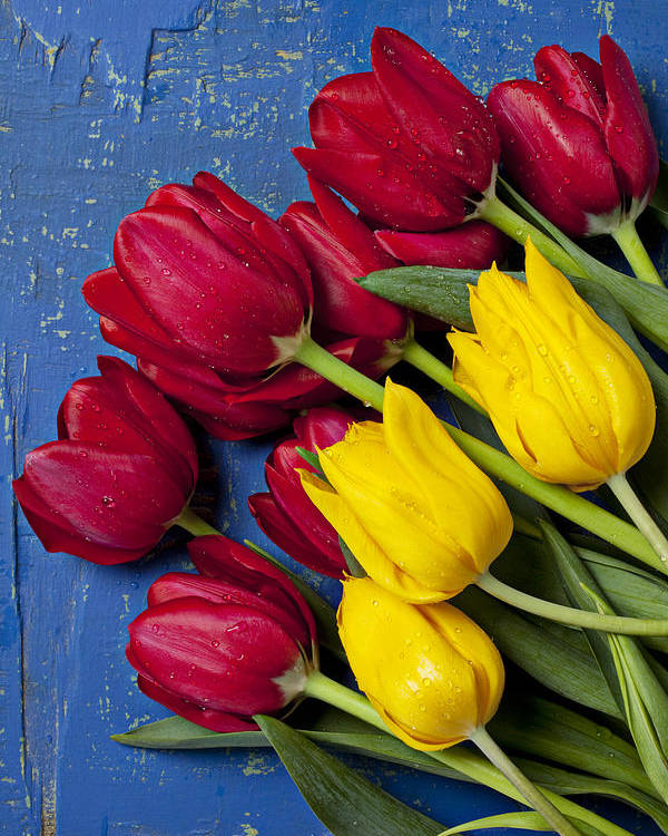 Red Yellow Tulips Poster featuring the photograph Red And Yellow Tulips by Garry Gay