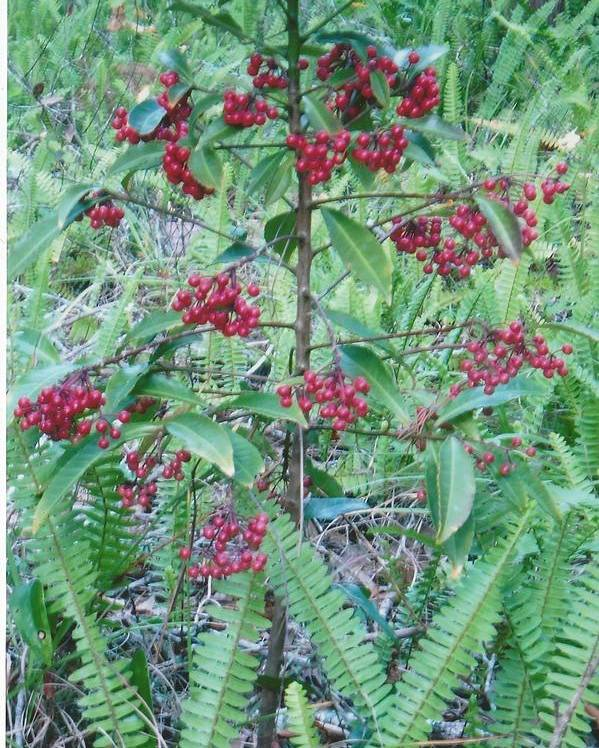Photograph Poster featuring the photograph Red Berries by Tara Kearce