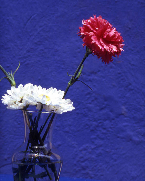 Blue; Bloom; Beauty In Nature; Botany; Carnation; Close-up; Close; Up; Crete; Color; Poster featuring the photograph Red Carnation by Steve Outram