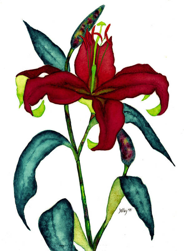 Watercolor Poster featuring the painting Red Lily by Stephanie Jolley