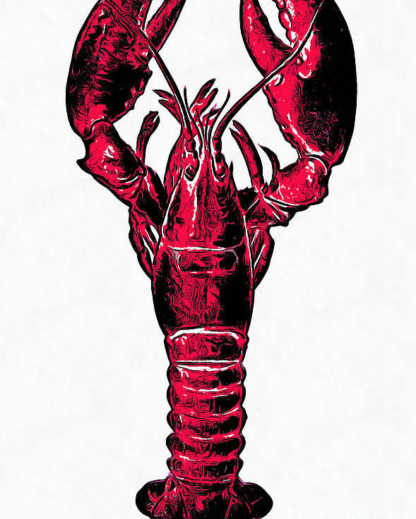 Lobster Poster featuring the drawing Red Lobster by Edward Fielding