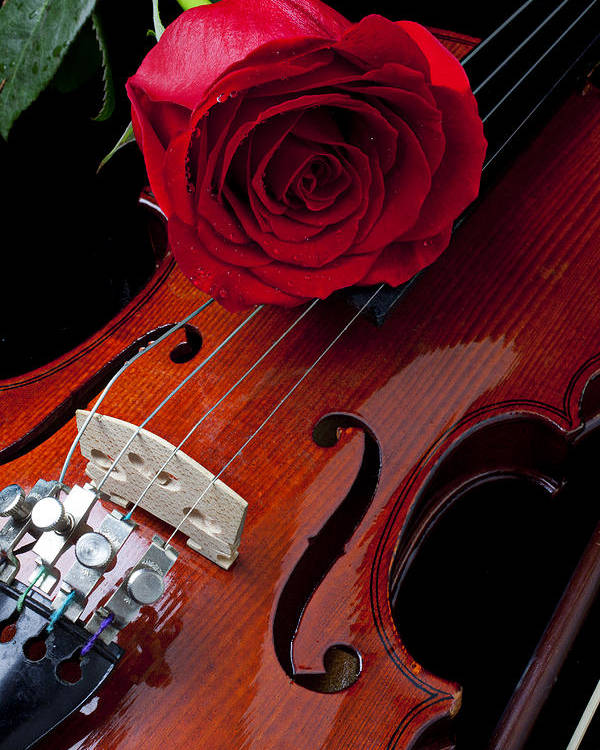 Violin Poster featuring the photograph Red Rose With Violin by Garry Gay