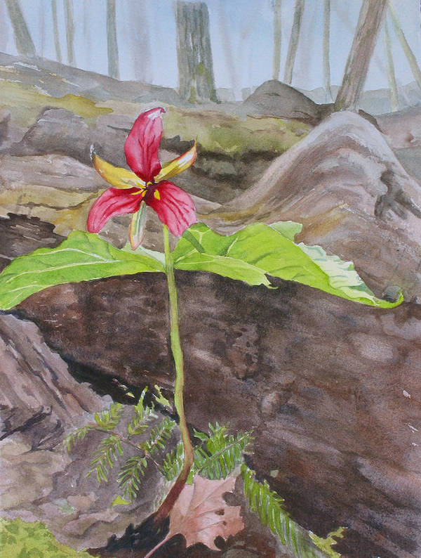 Red Trillium Poster featuring the painting Red Trillium In The Spring by Debbie Homewood