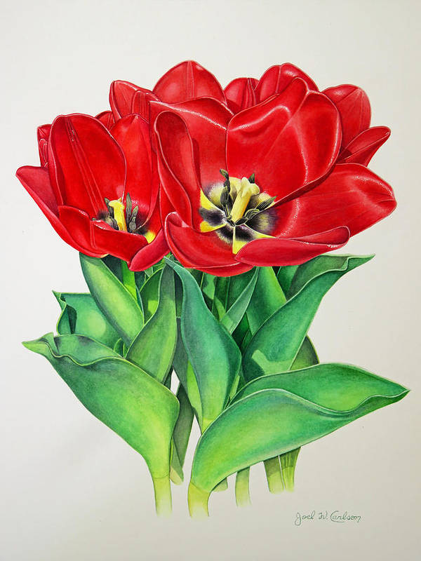 Watercolour Poster featuring the painting Red Tulips by Joel Carlson