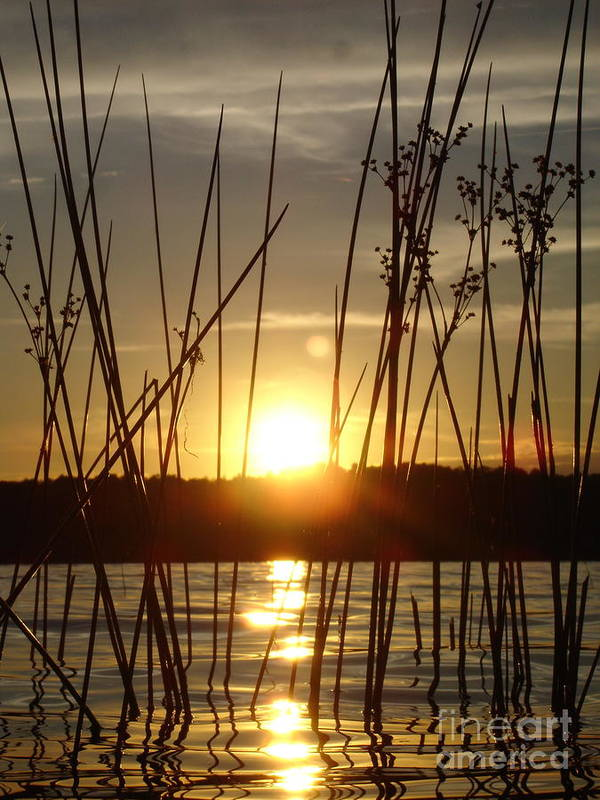 Landscape Poster featuring the photograph Reeds In A Lake by Chad Natti