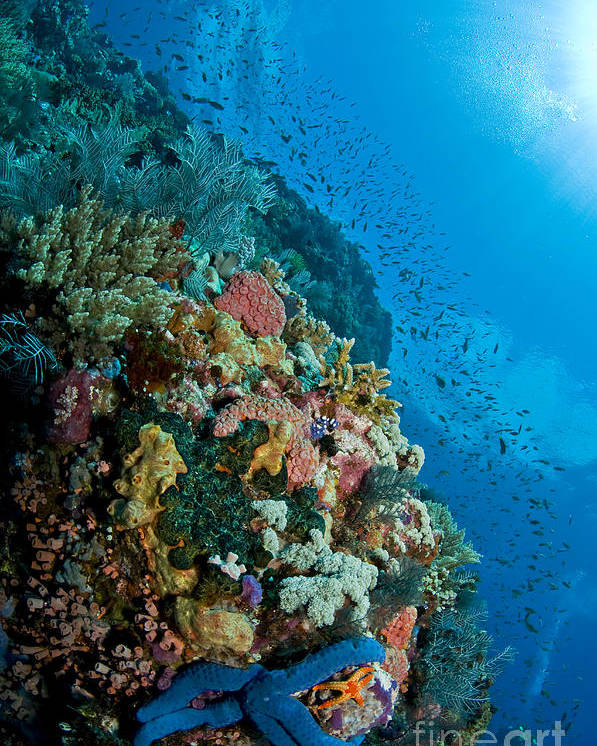 Indonesia Poster featuring the photograph Reef Scene With Corals And Fish by Mathieu Meur