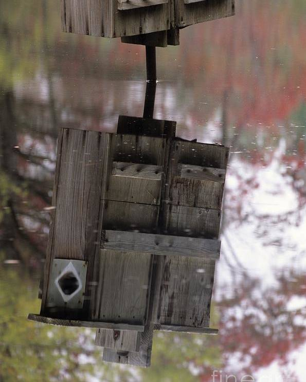 Wood Duck Poster featuring the photograph Reflection Of Wood Duck Box In Pond by Erin Paul Donovan