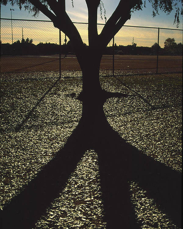 Tree Poster featuring the photograph Reflections In A Park by Randy Oberg