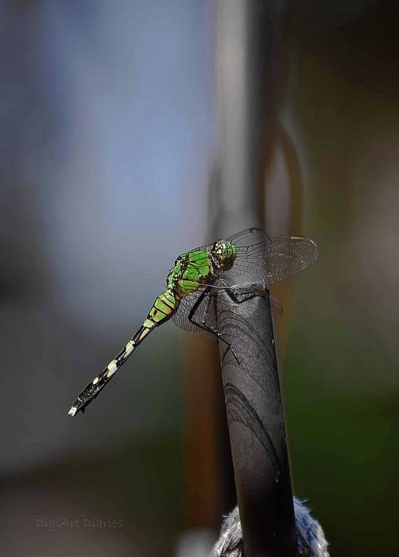 Dragonfly Poster featuring the photograph Regal Shadows by DigiArt Diaries by Vicky B Fuller