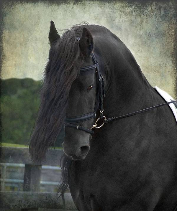 Horses Poster featuring the photograph Remme by Fran J Scott