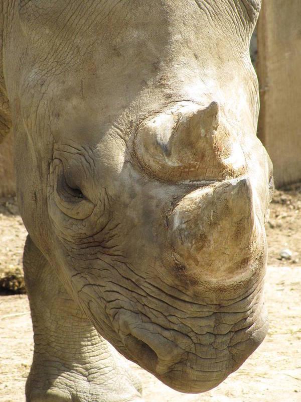 Rhino Poster featuring the photograph Rhino Closeup by George Jones
