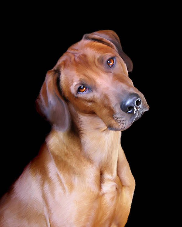 Rhodesian Poster featuring the digital art Rhodesian Ridgeback by Julie L Hoddinott