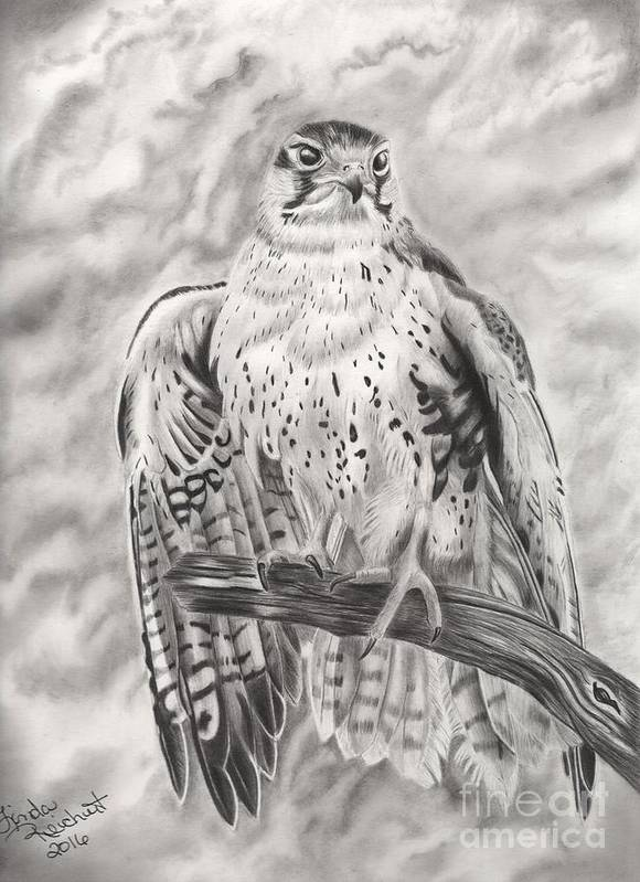 Falcon Poster featuring the drawing Rising Sun by Linda Reichert