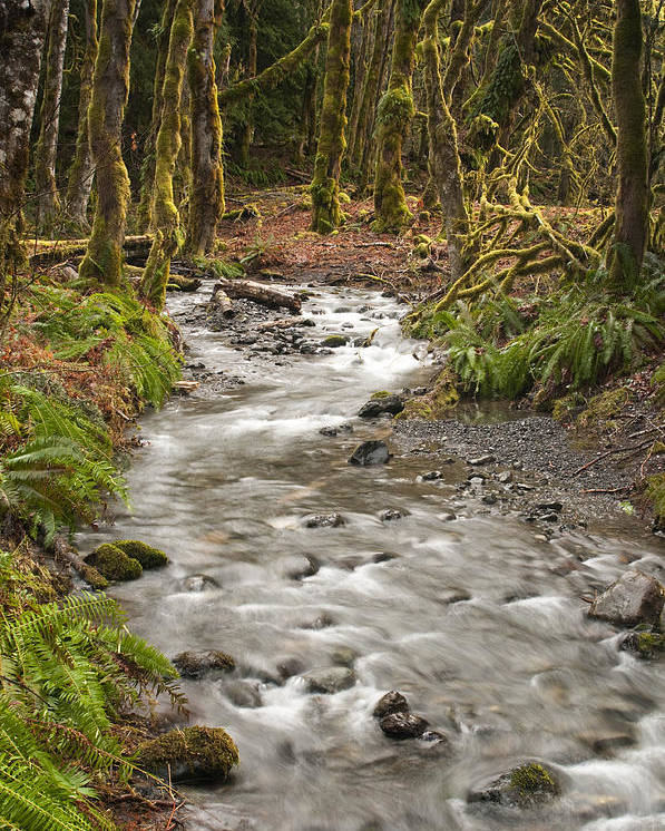 Forest Poster featuring the photograph River Forest by Chad Davis
