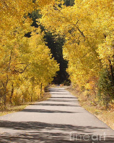 Autumn Poster featuring the photograph Road to Autumn by Dennis Hammer