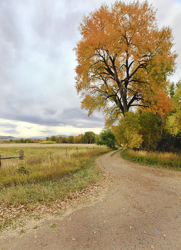 Trees. Fallcolors .big. Tree. Dirt. Road. Long. Road. Yellow. Grass. Cloudy. Storm. Green. Blue. Aspin. Yellow. Aspin Tree Phbgotography. Mixed Media. Mixed Media Photography. Colorado Fall Colors. Mixed Media Fall Colors. Fall Color Greeting Cards. Fort Collins Colorado Fall Colors. Colorado Greeting Cards.  Poster featuring the photograph Road To Dads Place by James Steele