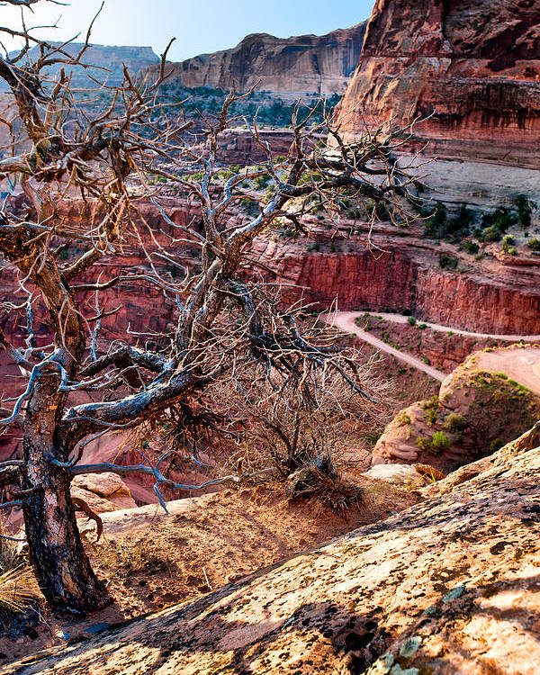 Canyonlands Poster featuring the photograph Road To Nowhere by Renee Sullivan