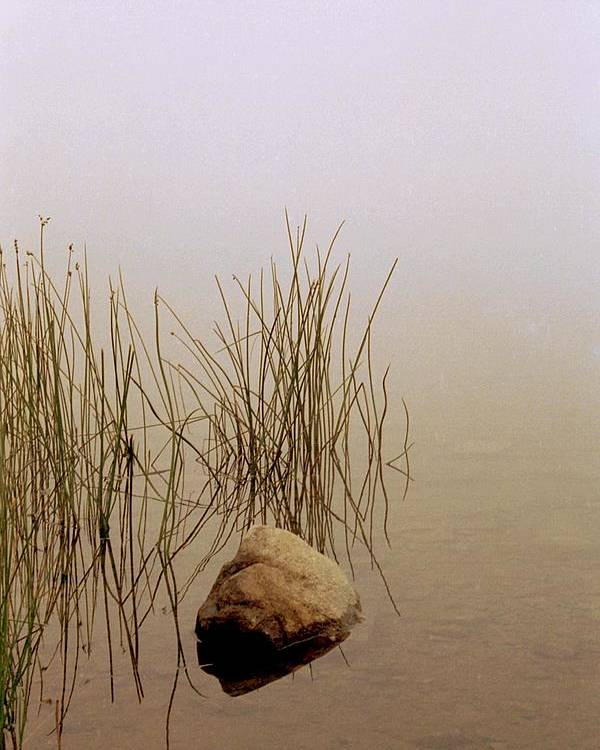 Calm Poster featuring the photograph Rock And Reeds On Foggy Morning by Roger Soule