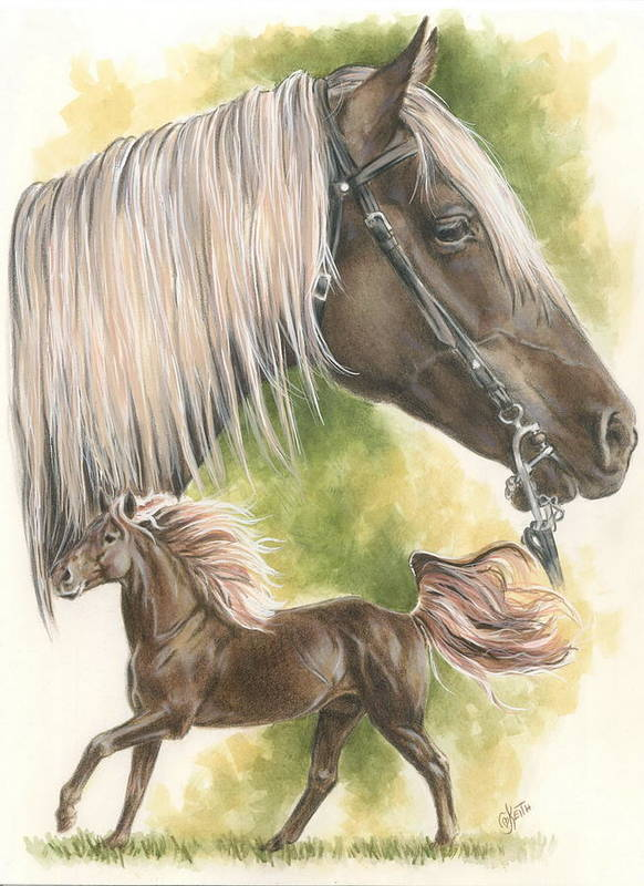 Domestic Poster featuring the mixed media Rocky Mountain Horse by Barbara Keith
