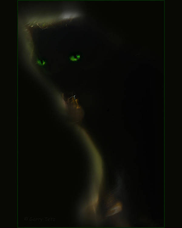 Cat Feline Poster featuring the photograph Romeo 2 by Gerry Tetz