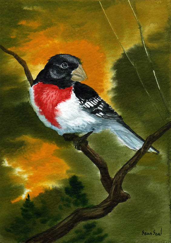 Birds Poster featuring the painting Rose Breasted Grossbeak by Sean Seal