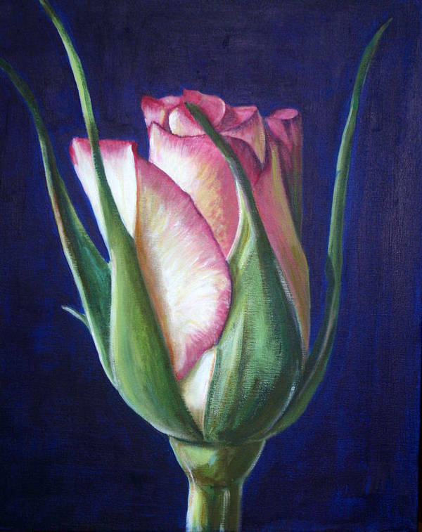 Rose Poster featuring the painting Rose Bud by Fiona Jack