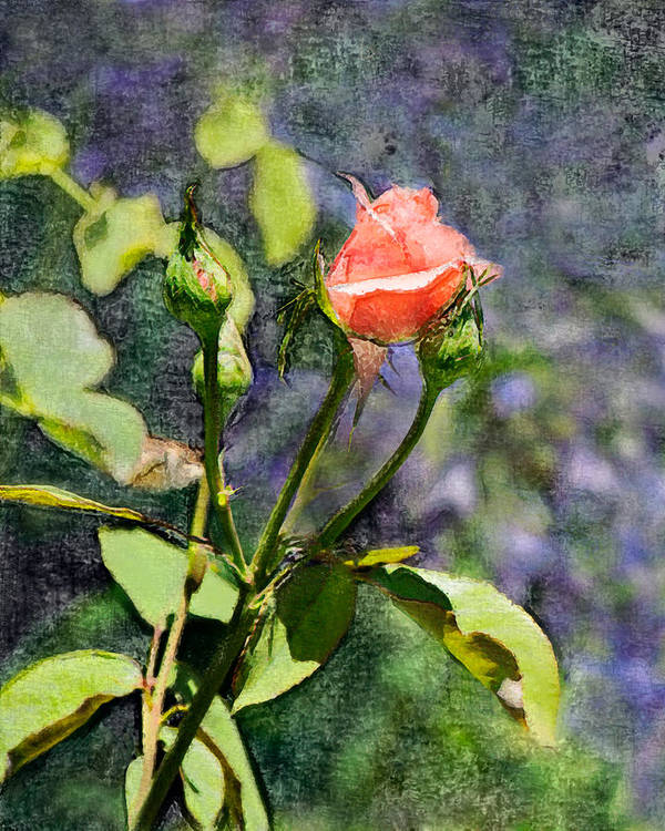 Rose Poster featuring the digital art Rose Elegance Art by Sherry Curry