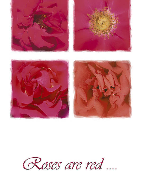 Roses Poster featuring the photograph Roses Are Red .... by Hazy Apple