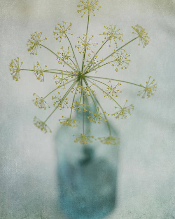 Dill Poster featuring the photograph Round Dance by Priska Wettstein