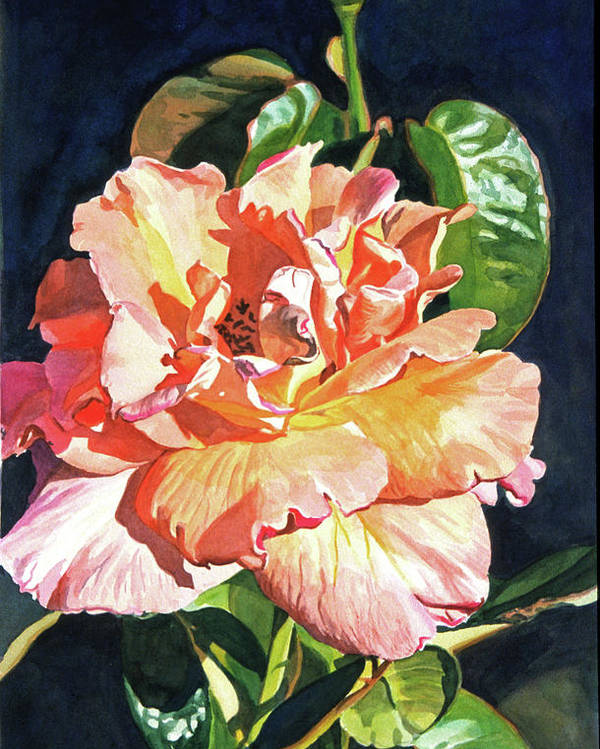 Roses Poster featuring the painting Royal Rose by David Lloyd Glover