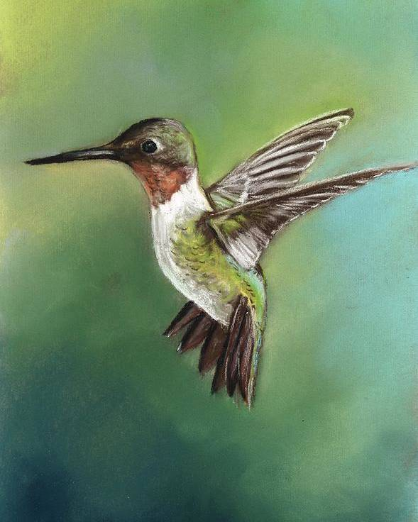 Bird Poster featuring the painting Ruby Throated Hummingbird by Charlotte Yealey